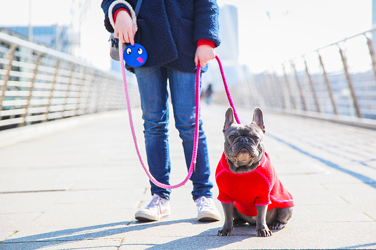 pets dog french bulldog London photo shoot spring westminster notting hill fanily harper and hugo accessories (1)